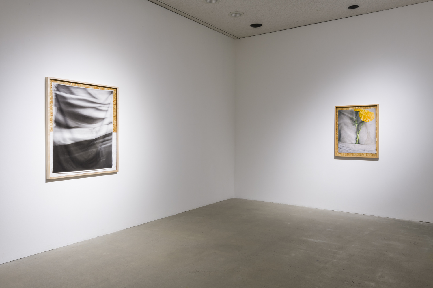 In this artwork installation by the artist David Alekhuogie, one artwork hanging on the wall depicts the artist's clothed body from the torso to the top of his pants. The fabric he's wearing has many creases and crinkles; this photograph is in shades of grey, white and black. This photograph is placed on top of a cork board, with the bottom half of the cork board painted white. To the right of this work is another artwork hanging on the wall of a photograph depicting the backside of a concrete human figure, with a bright marigold flower and green stem placed in the crackline of the figure. The figure is also wearing underwear that says