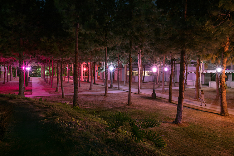 This artwork installation by the artist Lucia Koch includes nine lamp posts in the pine grove outside of the gallery's entrance with various shades of pink, purple, red, and orange light filters on their glass panels.