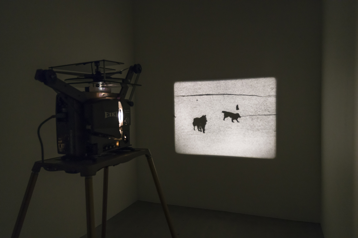In this artwork by the artist Matthew Lax, a 16 mm video projector is playing a black and white work. The still pictured here features two dogs in the snow.
