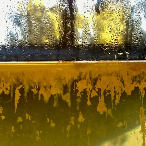This is a color photograph of a sculptural work by Maru Garcia. The photograph is a close-up of a circular glass vase half filled with living culture. The top half of this photograph depicts the condensation of water droplets against the clear glass, with green and yellow biomorphic shapes behind it. The bottom half of this photograph entails living culture hanging from the surface of the water. The culture is yellow in color and pairs against a green colored water.