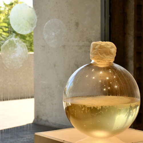 This is a color photograph of a sculptural installation by Maru Garcia.In the center of the image is a circular glass vase half filled with living culture. The neck of the vase is covered with a tan cloth. The vase is placed on a pedestal that has a dimly lit top surface. To the back left of this work is a glass window with three circular, transparent films arranged in a triangular shape. To the back right of the center work is another circular glass vase half filled with living culture placed on a pedestal that has a dimly lit top surface.